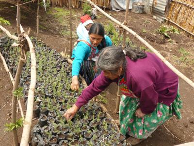 Cba guatemala reforestation and soil conservation to for Soil as a resource introduction