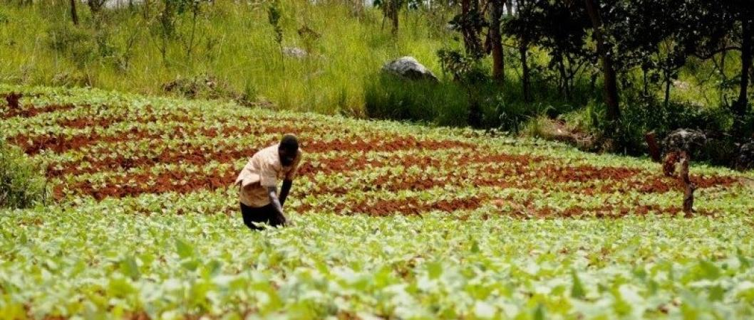 Strengthening climate resilience of agricultural livelihoods
